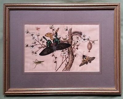 Finely painted antique Chinese Painting on Silk, Butterflies and Insects