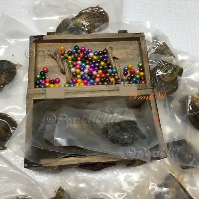 Bulk Akoya Oysters with 6-7mm Round Pearls - Located USA