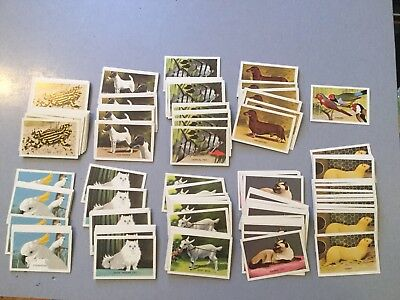 1960,s Shell Pets Project Collectors Cards Lot Of 217