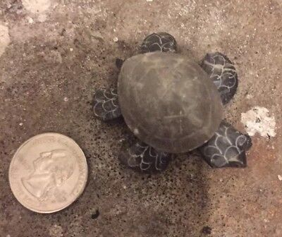 Small Marble Turtle Magnet