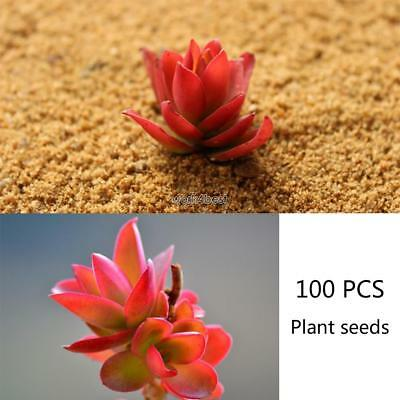 100 rare succulents red seeds easy to grow potted flower bonsai