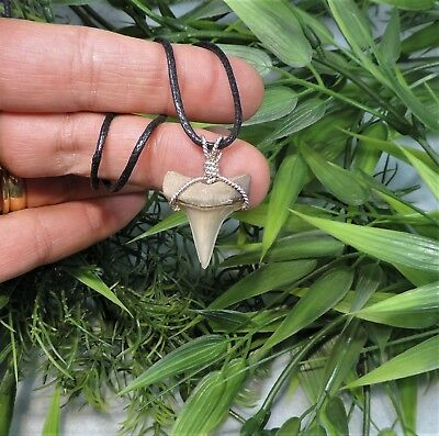 Nice Mako Sharks Tooth Necklace/jewelry/megalodon Fossil Sharks Teeth