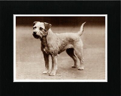 Border Terrier Lovely Vintage Style Sepia Dog Art Print Matted Ready To Frame