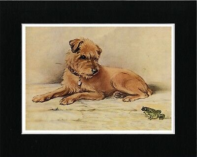 Border Terrier And Frog Lovely Vintage Style Dog Art Print Matted Ready To Frame