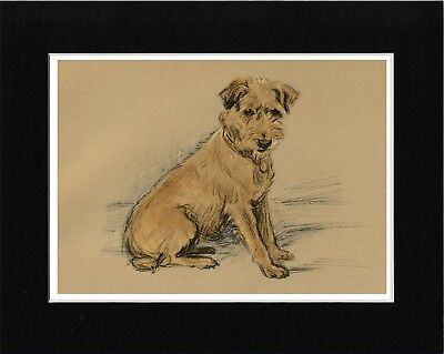 Border Terrier Seated Dog Lovely Vintage Style Art Print Ready Matted