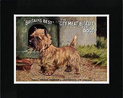 Cairn Terrier Lovely Vintage Style Dog Food Advert Art Print Ready Matted