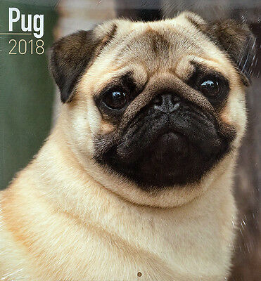"Pug ⚫ 2018 Wall Calendar ⚫ by Turner/Lang/Avonside (12"" x 24"" when opened)"