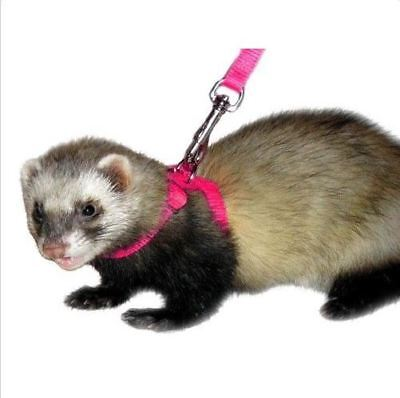 Marshall Pet Products Ferret Harness & Lead Set - you choose color