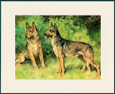 German Shepherd Two Dogs Lovely Dog Print Mounted Ready To Frame