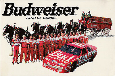 Budweiser Clydesdale Draft Horse Postcard - 8 Horse Hitch And Ford Thunderbird