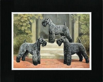 Kerry Blue Terrier Three Dogs Vintage Style Dog Art Print Ready Matted