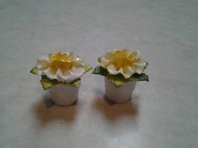 Coalport Fine China yellow flower salt and pepper shakers?