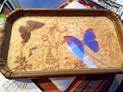 Victorian Butterfly Tray Dry Flowers Glass Top Circa 1900