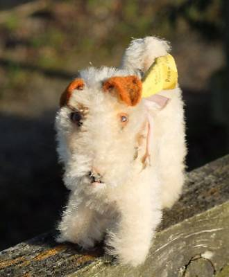 OLD STEIFF 'FOXY' FOX TERRIER DOG, BUTTON IN EAR, STOCK LABEL, RIBBON BELL 1960s
