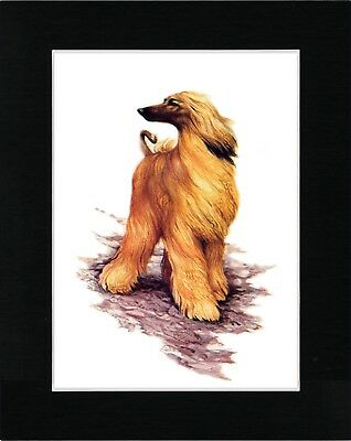 Afghan Hound Standing Dog Lovely Vintage Style Dog Art Print Ready Matted
