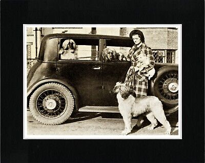 Afghan Hound Lady Loading Her Dogs Into Old Car Vintage Style Dog Print Matted