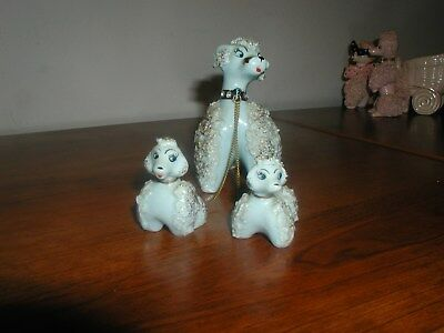 Blue Spaghetti Poodle Mom With Pups - Very Nice