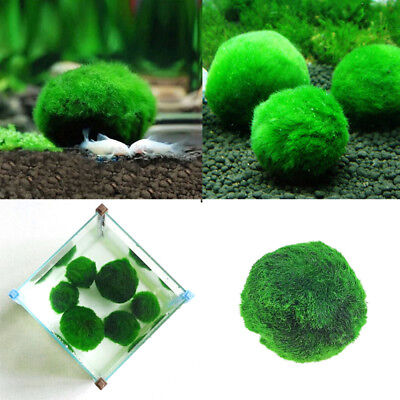 Marimo Moss Ball Cladophora Live Aquarium Plante Poisson Aquarium Décor 3-4cm