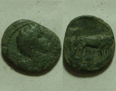 Rare original Ancient Greek Roman coin Philippi Augustus 12 BC / 2 colonist oxen