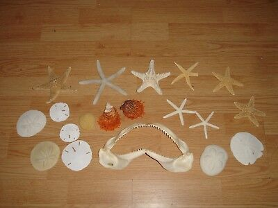 Real Shark jaw Starfish Sand Dollar Urchin Clam  Mixed Sea Fossil Lot