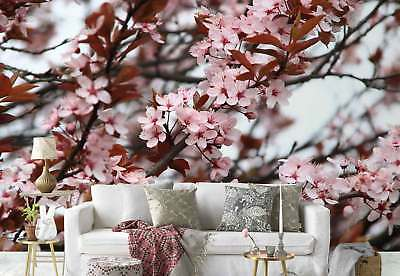 Cherry blossoms Pink  Photo Wallpaper Wall Mural (FW-1043)