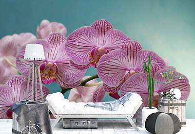 Orchids Flowers Macro Photo Wallpaper Wall Mural (FW-1039)