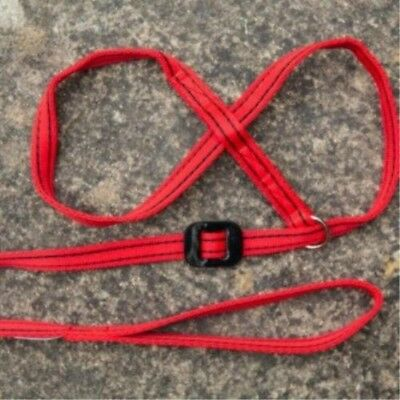 Gencon All-In-1 Dog Headcollar Lead In One - Red/Black