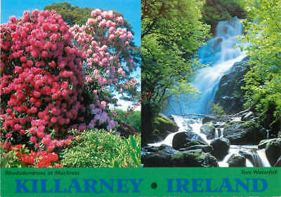 Picture Postcard:-Killarney, Rhododendrons At Muckross, Torc Waterfall