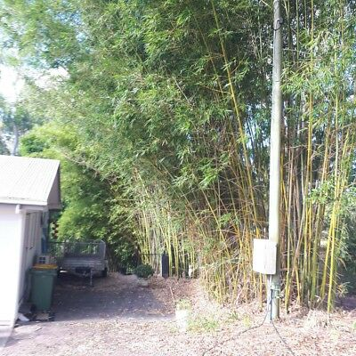 Free Bamboo to remove