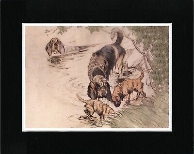 Otterhound And Border Terrier Dogs At Work Vintage Style Dog Print Ready Matted