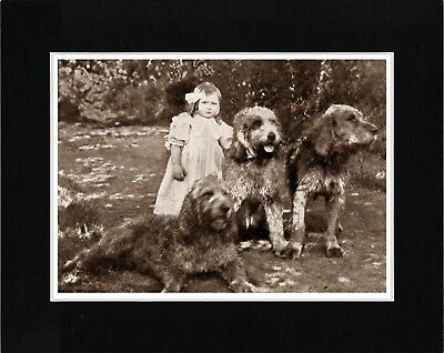 Small Girl And Otterhound Dogs Charming Vintage Style Dog Print Ready Matted