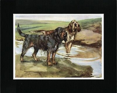 Otterhound Two Dogs Vintage Style Dog Print Matted Ready To Frame