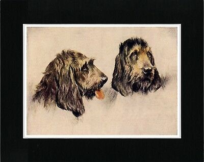 Otterhound Dogs Head Study Vintage Style Dog Print Matted Ready To Frame
