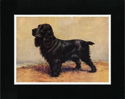 Cocker Spaniel Lovely Vintage Style Dog Art Print Ready Matted