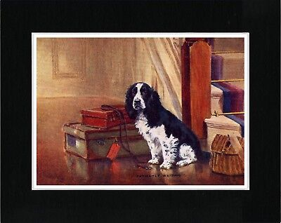 Cocker Spaniel Waiting With Luggage Vintage Style Dog Art Print Ready Matted
