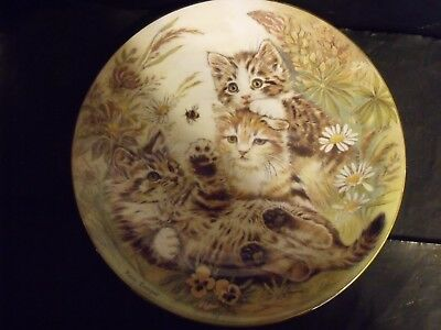 WHOOPS - A - DAISY!  CAT PLATE by PAM COOPER