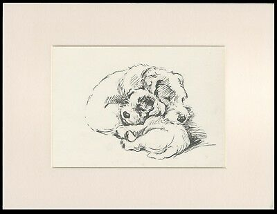 Sealyham Terrier Pups Sleeping Lovely Old 1930's Lucy Dawson Dog Print Mounted