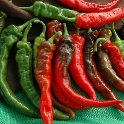 Cheyenne Hybrid F1 Hot Pepper Seeds - Delicious served grilled or dried. !!