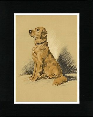 Golden Retriever Seated Dog Lovely Vintage Style Dog Art Print Ready Matted