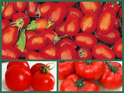 Tomato Seeds, Tasty Tomatoes 3 Pk Special, Heirloom, Cherry, Roma, Beefsteak