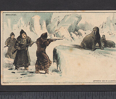 Hunting Walrus 1882 Arctic Sport 19th Century North Pole Advertising Trade Card