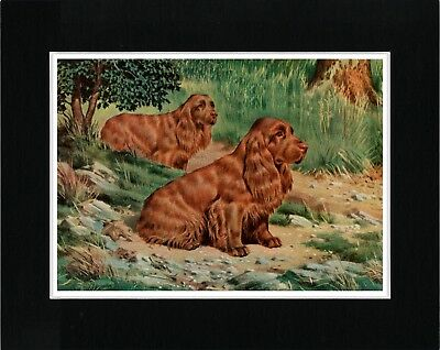 Sussex Spaniel Dogs Vintage Style Dog Art Print Ready Matted