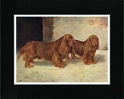 Sussex Spaniel Two Dogs Lovely Vintage Style Dog Art Print Ready Matted