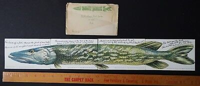 SUPER 4 Postcard Set Installment w Envelope 1906 Musky? Fish Story Huld Puzzle