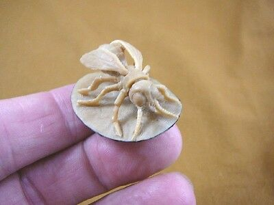 (tb-ins-1) House fly Tagua NUT palm figurine Bali detailed love insects carving