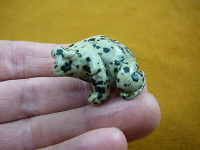 (Y-FRO-567) Black white spotted FROG gemstone CARVING figurine frogs amphibians