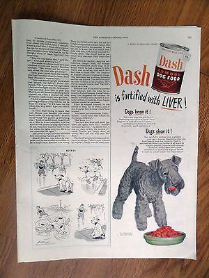 1949 Dash Armour Dog Food Ad   Kerry Blue Terrier Dog