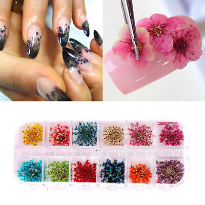 NAIL ART 3D MINIS MANICURE TIPS DECORATION WHEEL INTL. 12 Colors Nail Art Real Dried Flowers DIY Nail Art Tips Decoration Manicure Tool