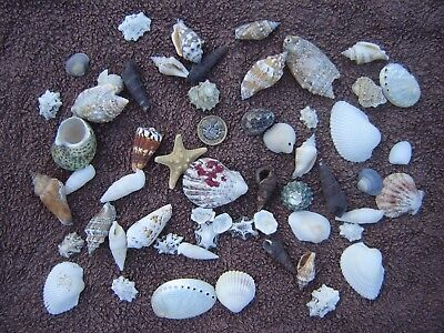 50 Beach Mixed Natural Sea Shells Craft Wedding SeaShells