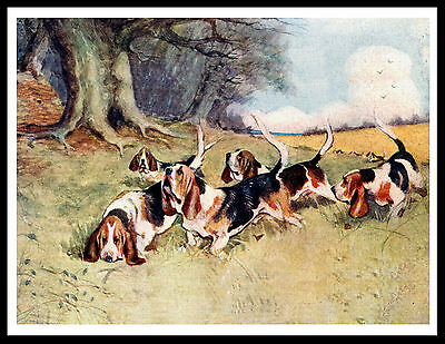 Basset Hound Pack Lovely Vintage Style Dog Print Art Poster